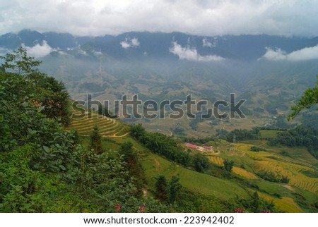 Sapa, Vietnam. Rice fields on the way down from the mountains. - stock photo