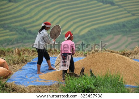 SAPA, VIETNAM - SEP 4: Hmong woman farmer woking on terrace rice fields on mountain at September 4, 2015 in Sapa, Lao Cai, VIetnam.