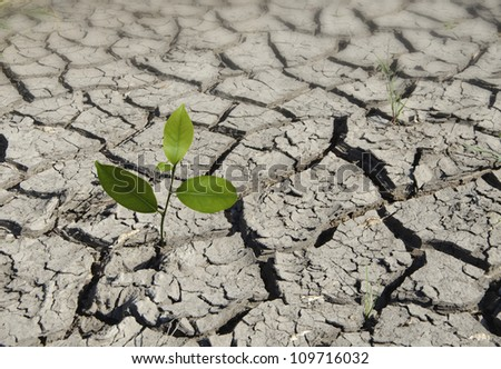 sapling growing from arid land - stock photo