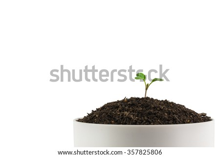Sapling of a tree on a white background.
