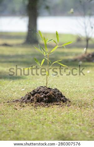 Sapling tree - stock photo