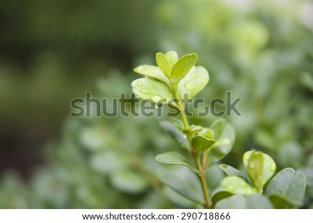 Sapling with water droplets - stock photo
