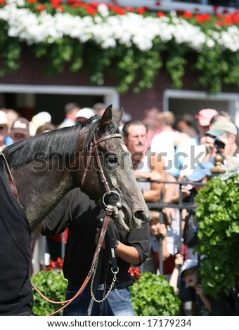 SARATOGA SPRINGS - August 23:  Aquino (URU) Leaves the Winners Circle Following the First race on Travers Day August 23, 2008 in Saratoga Springs, NY. - stock photo