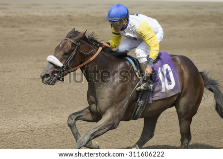 SARATOGA SPRINGS, NY - August 29, 2015: #10 Tale of S'avall ridden by C. Velasquez wins the 4th race on Travers Day at Historic Saratoga Race Course on August 29, 2015 Saratoga Springs, New York - stock photo