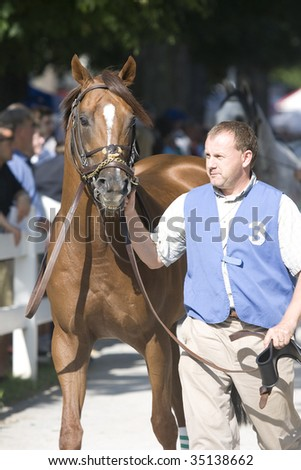 "SARATOGA SPRINGS, NY- AUGUST 7:  ""Tifone"" enters the paddock for the ""Johns Call""at Saratoga Race Track, August 7, 2009 in Saratoga Springs, NY. - stock photo"