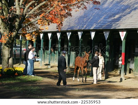 Saratoga Springs, NY - October 12, 2008: Some prospective buyers look over a weanling during the 2008 New York State Breeders fall breeding stock sale at the Saratoga Race Track October 12, 2008 - stock photo