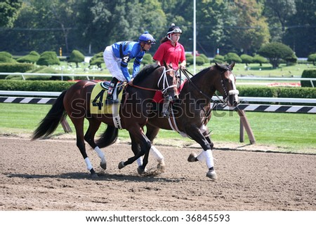 """SARATOGA SPRINGS, NY- SEPT 5: """"Northern Giant"""" with Jamie Theriot aboard in the in the post parade for the 2nd race at Saratoga Race Track, September 5, 2009 in Saratoga Springs, NY. - stock photo"""