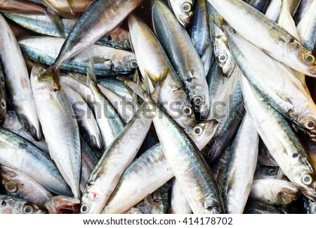 sardines fish background