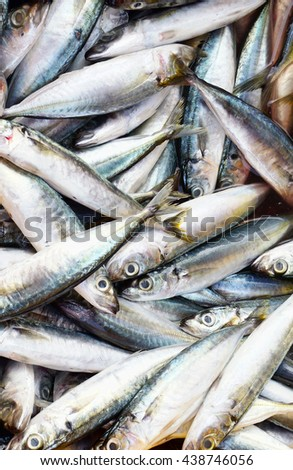 sardines fish background - stock photo