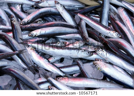 Sardines in a local market in Athens - Greece - stock photo