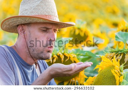 Satisfied farmer in a sunflowers field blowing at sunflower seeds . Copy space, lens flare, sunset light