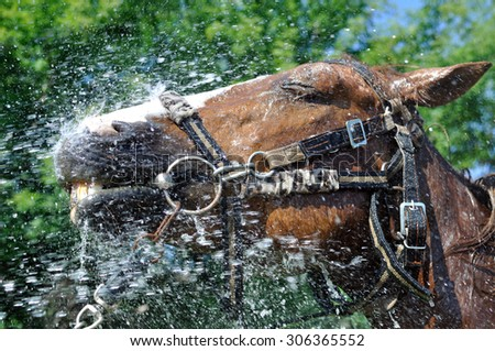 satisfied happy horse cooled by water in hot weather  in series, 1 of 4 - stock photo