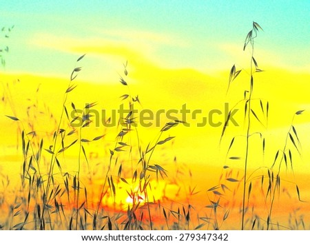 Saturated image of oat plants at sunrise - stock photo