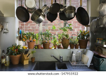 Saucepans hanging over sink against potted plants on window sill in domestic kitchen - stock photo