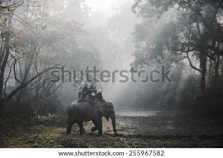 SAURAHA, NEPAL - CIRCA DECEMBER 2014: Tourists doing an elephant safari in Chitwan National Park. - stock photo