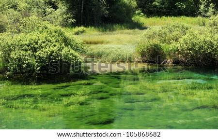 Sava spring in Zelenci - stock photo