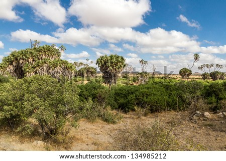 Savana landscape in Africa. Tsavo West, Kenya. - stock photo