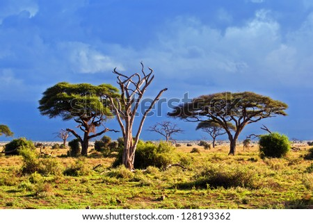 Savanna landscape and its flora in Africa, Amboseli, Kenya - stock photo