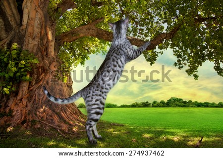 Savannah kitten playing under a tree on a sunny day - stock photo