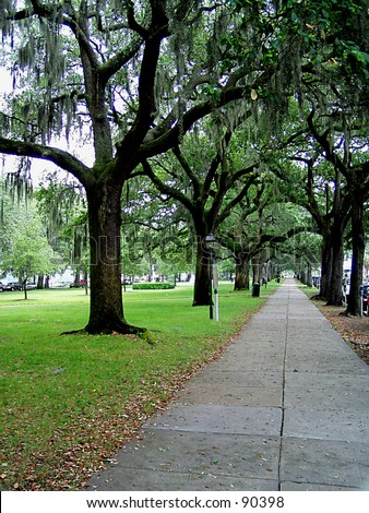 Savannah Tree Lined Sidewalk - stock photo