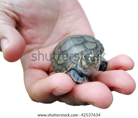 Save the turtle - stock photo