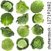 Savoy Cabbage head , collection set ,Isolated on White Background - stock photo