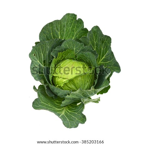 Savoy Cabbage head Isolated on White Background
