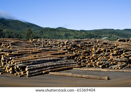 Sawmill in Garibaldi, Oregon, outdoor logs storage