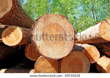 sawn up tree - stock photo