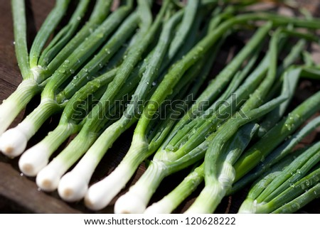 Scallions laying on a wooden table. - stock photo