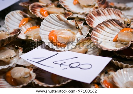 Scallops for sale at the Rialto fish market - Venice, Venezia, Italy, Europe - stock photo