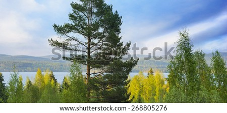 Scandinavian lake on sunny summer day with pine tree and birch trees in foreground - stock photo