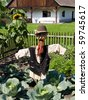scarecrow in garden with cabbage - stock photo