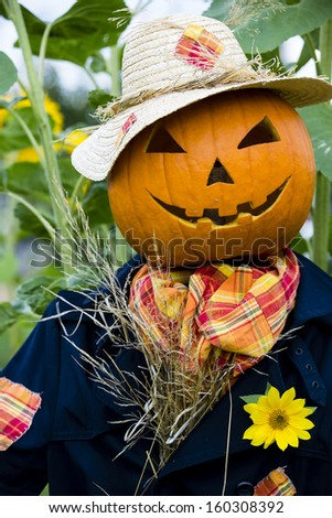 Scarecrow in the garden - Autumn harvests, Thanksgiving vegetable, Halloween - stock photo