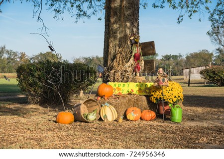 Scarecrow, yellow mum flowers, harvested orange pumpkins, squashes, gourd, watering can on hay front yard garden farm house in rural Arkansas, USA. Traditional Halloween, Thanksgiving, Fall decoration