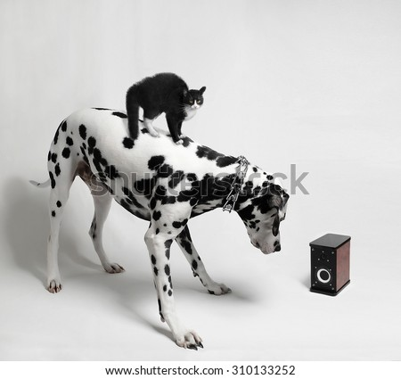 Cat Riding Stock Images Royalty Free Images Vectors Shutterstock