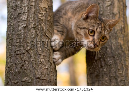 Scared cat on a tree - stock photo