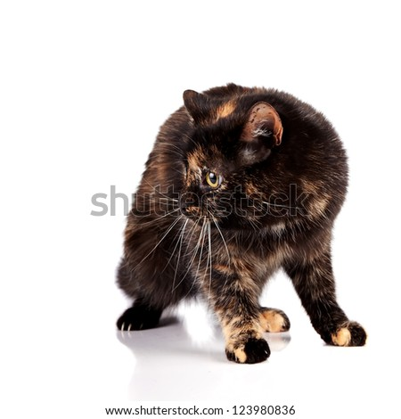 Scared cat on a white background - stock photo