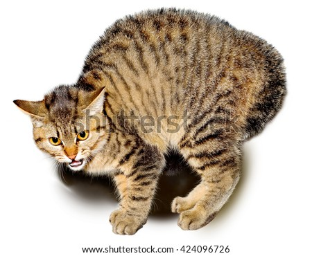Scared cat on a white background.The image is not in isolation - stock photo