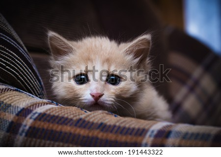 Scared kitten hiding at home. - stock photo