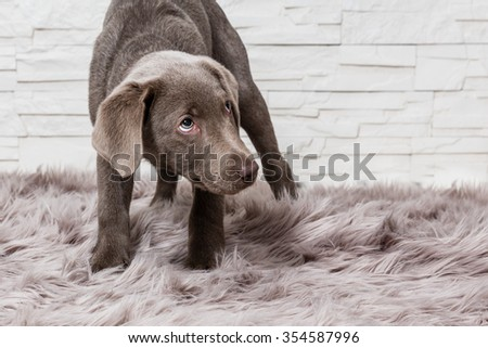 scared puppy - stock photo