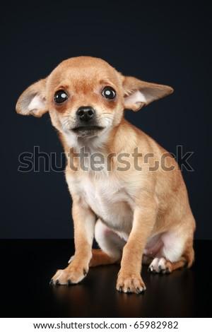 Scared puppy on dark background - stock photo