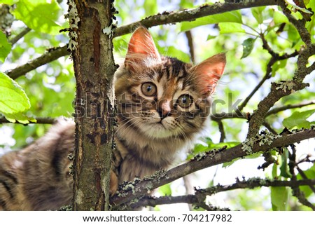 scared cat on tree stock images royalty free images vectors shutterstock. Black Bedroom Furniture Sets. Home Design Ideas