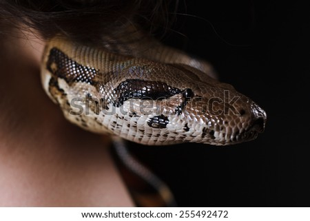 Scary and dangerous snake sitting. Close-up of snake head - stock photo