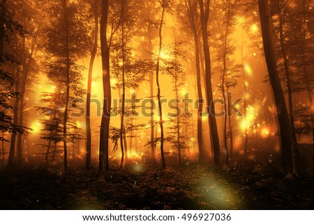Scary dark orange red color foggy artistic forest tree fairytale landscape with abstract fireflies.