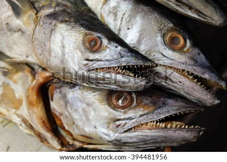 scary head fishes