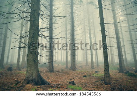 Scary mountain forest in dense fog - stock photo