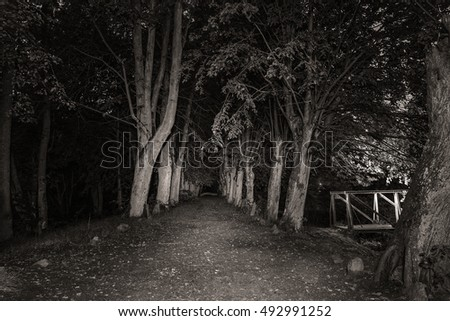 Scary old road between the tall trees in the night. Black and white.