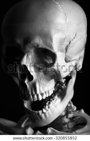 Scary Skeleton close up on black background - stock photo