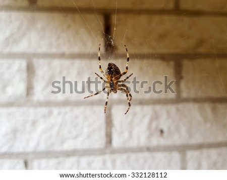 Scary spider watching the house. Zoom in and you will see all details of the spider. Nice to show to kids, too. - stock photo